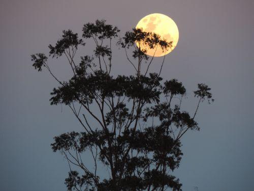 australia supermoon lunar