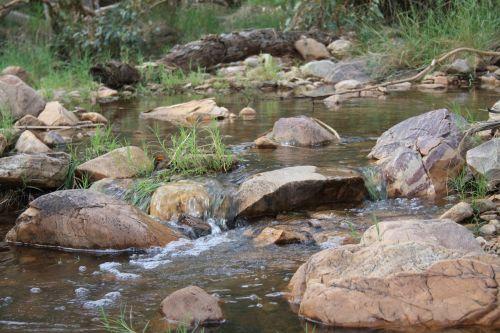 australia landscape reeds