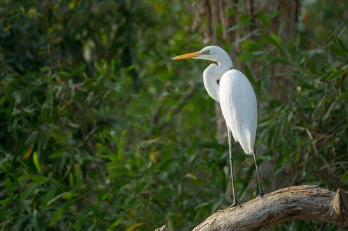 australia  northern territory  birds
