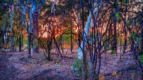 australian bush sunrise dry bush land