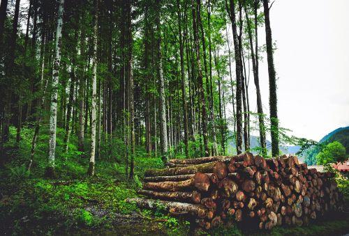 austria landscape forest