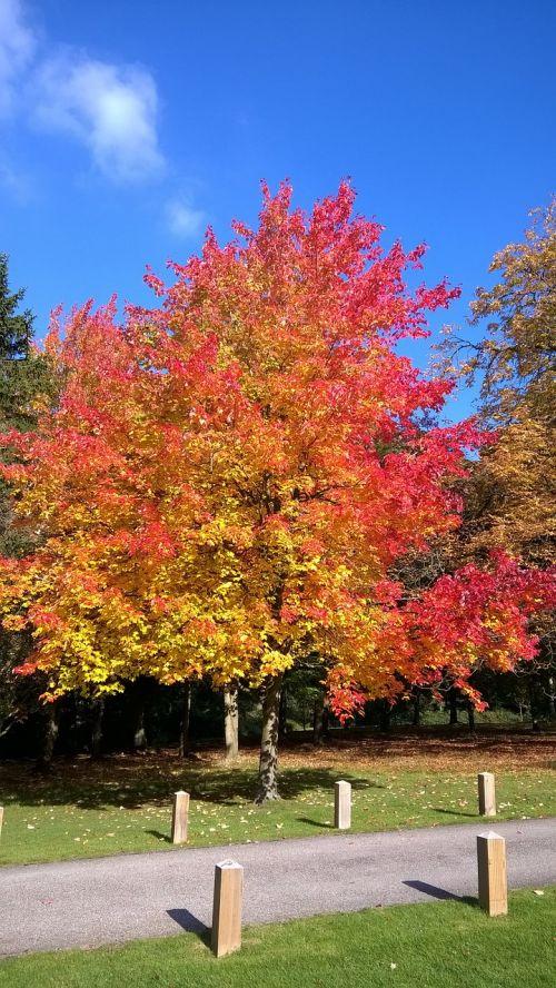 autumn leaves essex