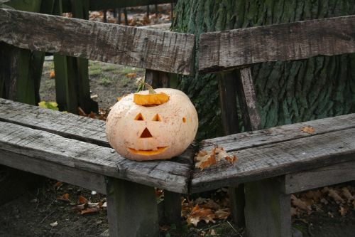 autumn pumpkin halloween
