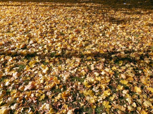 autumn leaves golden