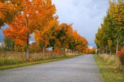 autumn avenue trees