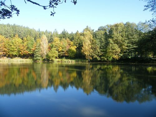 autumn emerge pond