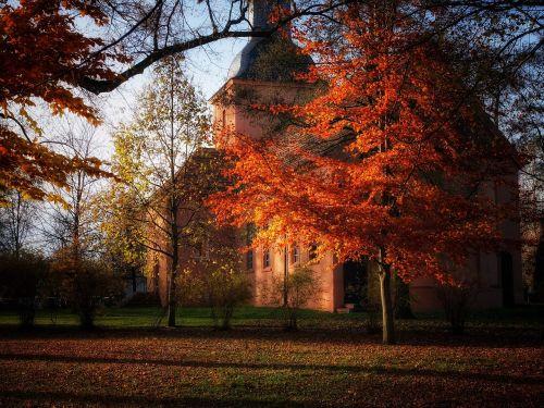 autumn november leaves