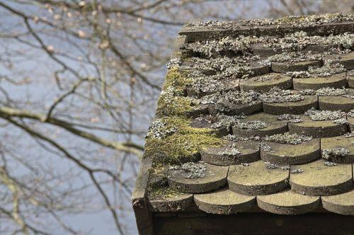 autumn roof moss
