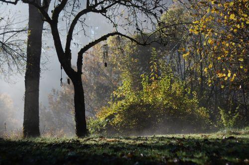 autumn morning autumn morning