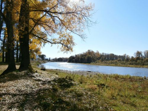 autumn trees nature