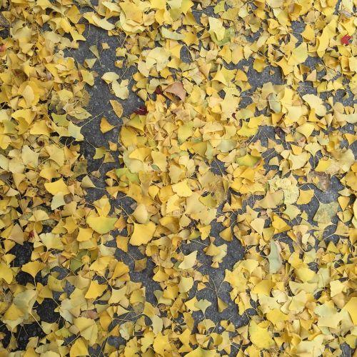 autumn bank leaves bank