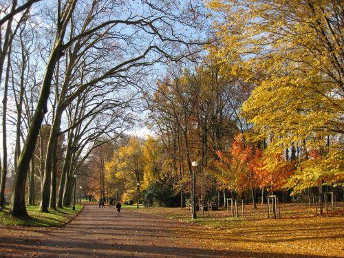 autumn park lyon