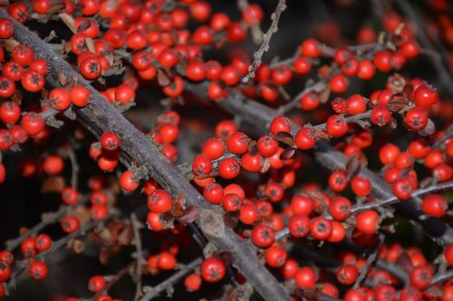 autumn crop autumn berries and crop