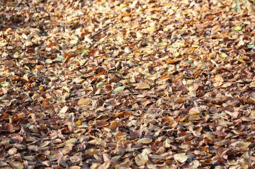 autumn leaves foliage