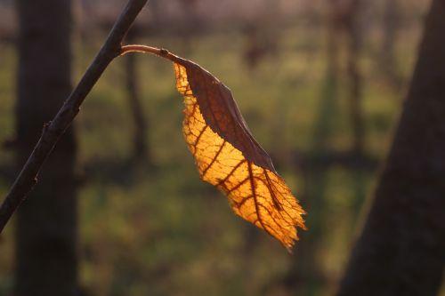 autumn nature moss