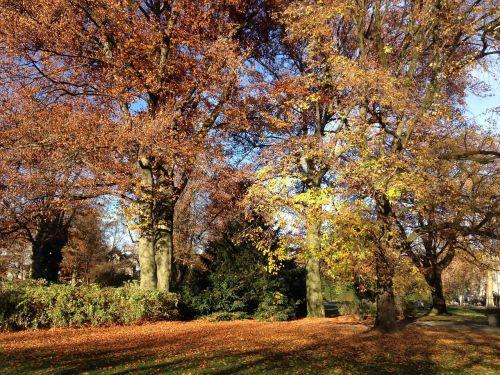 autumn autumn day leaves