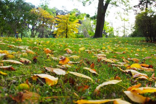 autumn autumn leaves beautiful
