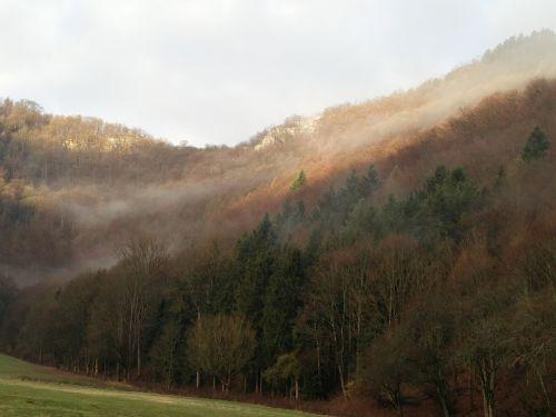 autumn fog forest