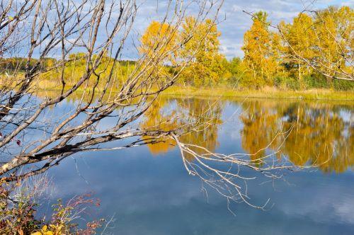 ruduo, fonas, kraštovaizdis, gamta, filialai, geltona, oranžinė, mėlynas, upė, vanduo, ruduo