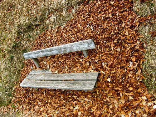 autumn bank leaves