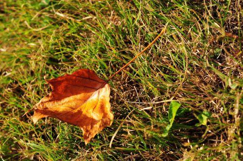 autumn defoliation grassland
