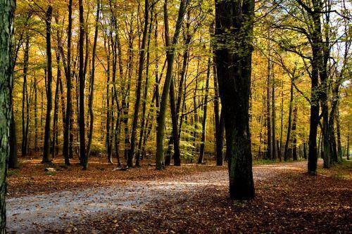 ruduo,spalva,spalvoti lapai,rudens miškas,kritimo spalva