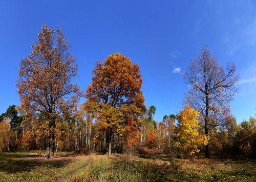 autumn forest glade glade