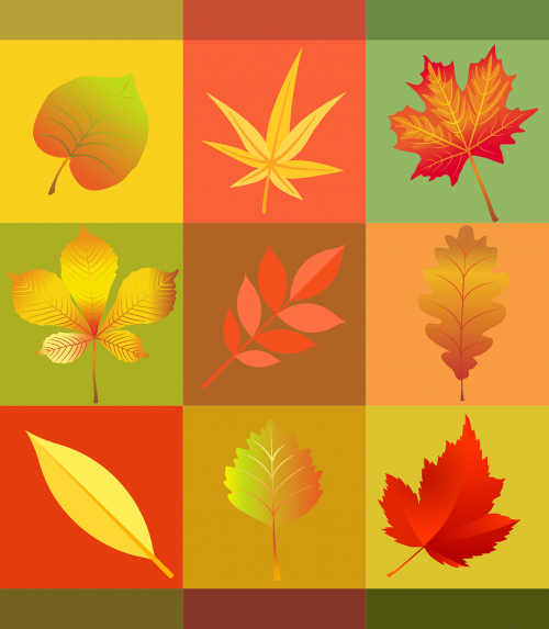 autumn leaves colorful