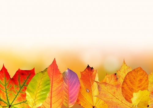 autumn leaves colorful