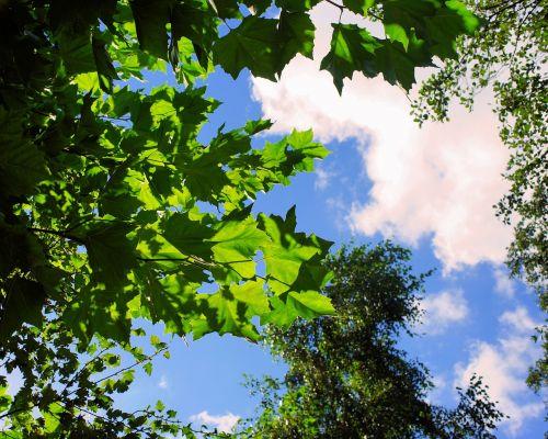 autumn canopy sky