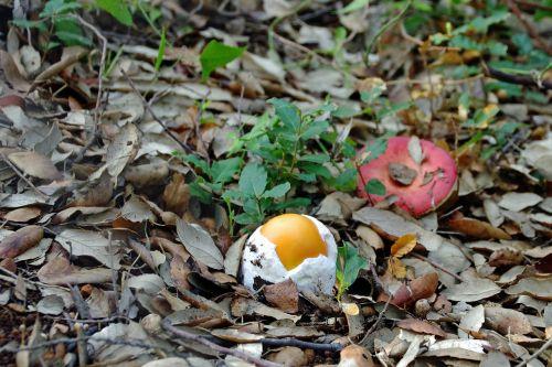 autumn mushrooms fungus