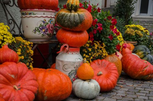 autumn pumpkins decoration