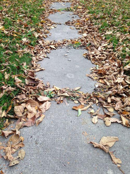 autumn leaves sidewalk