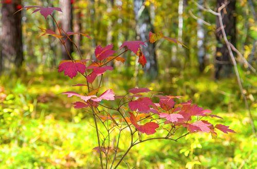 autumn sheet forest