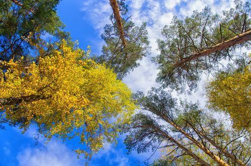 autumn sky golden autumn