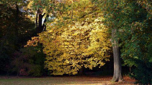 autumn autumn leaf fall color
