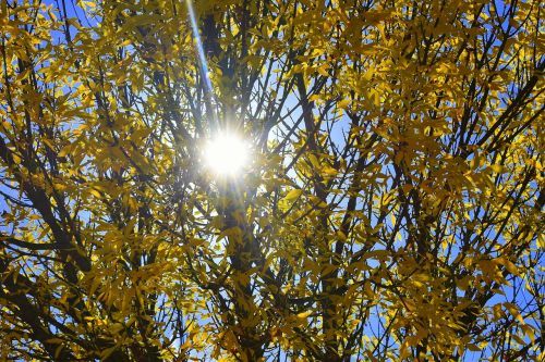 autumn yellow sun