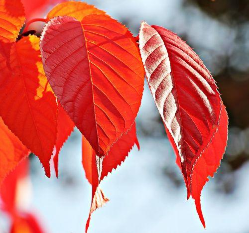 autumn fall leaves leaves