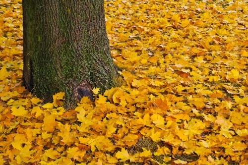 autumn gold golden autumn