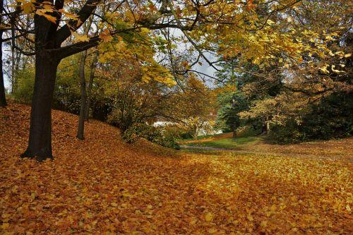 autumn nature colors