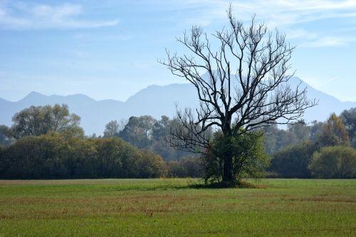 autumn tree individually