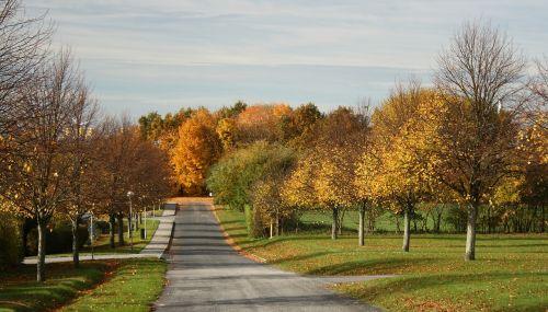 autumn colors allé