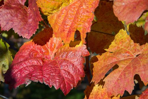 autumn leaves fall leaves