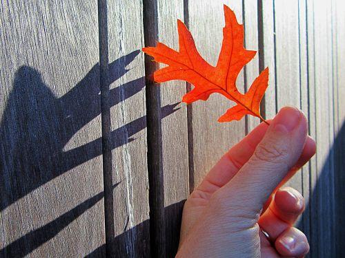 autumn autumn leaf shadow