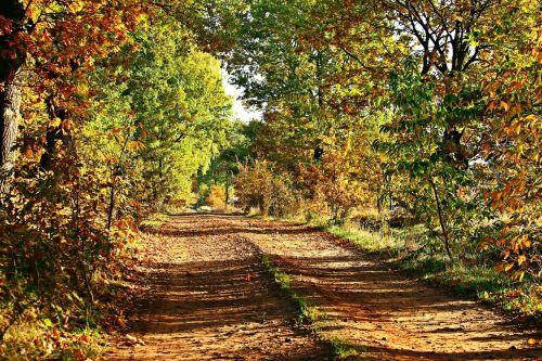 autumn away trees