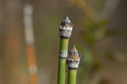 autumn green stems