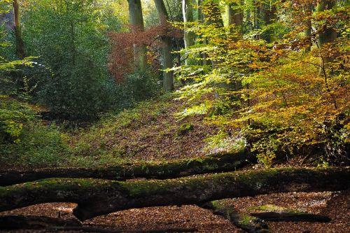 autumn nature trees