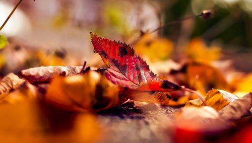 ruduo,kritimas,lapai,lapai,makro,Iš arti,krentantys lapai,spalvinga,vaizdingas,kraštovaizdis,hdr,panorama,kaimas