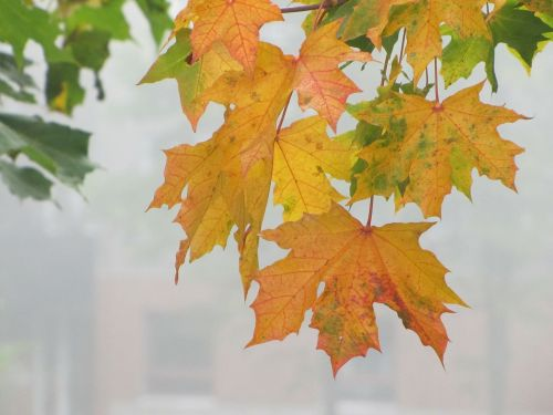 autumn autumn colors autumn leaves