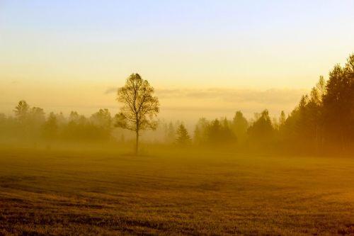 autumn tree field